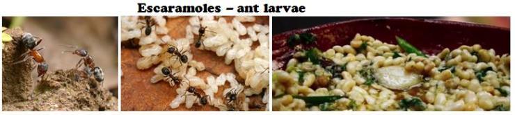 Escaramoles Ant Larvae a delicacy